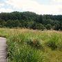 貴重な湿原植物群落・黒沢(くろぞう)湿原