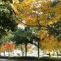 ひとり旅 [822] はやいもので秋も終わり、今年最後の紅葉観賞と錦鯉さん<中央森林公園'三景園'>広島県三原市