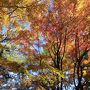 紅葉がきれいな季節。