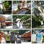 霧島神宮へ。  ここは、坂本竜馬が新婚旅行で訪れた場所としても有名です。 朱色の社殿が美しいこじんまりとしたお社でした。  神木の杉は樹齢約800年と推定され、南九州の杉の祖先とも。 力強さを感じる巨木でした。