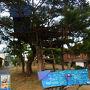 夕方のゆるんだ日差しの中、集落の作品と、高台にある作品をいくつか見てまわります(途中でカメラが電池切れ)。木の上に家が。