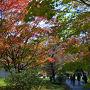 紅葉の名所は数あれ、道内有数の1箇所がココ 滝ノ上公園