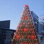 久しぶりの六本木ヒルズ。 もうクリスマスツリーが飾ってあります!