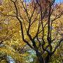 羽根木公園の紅葉
