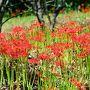 台風が過ぎ去った翌朝、田染荘の彼岸花が咲き始めたという出かけることに。 田染へ行く前に寄り道して風の郷公園へ行くことに。