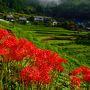 鶴見岳や志高湖の西の斜面です。