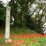 有名な彼岸花のスポット、七ッ森古墳群に来ました。(国指定文化財)