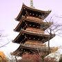 旧寛永寺五重塔 夕日が当たっていて幻想的に見えたが上手く捉えることが出来なかった。 4時頃訪れたが園内には「蛍の光」が流れていた。
