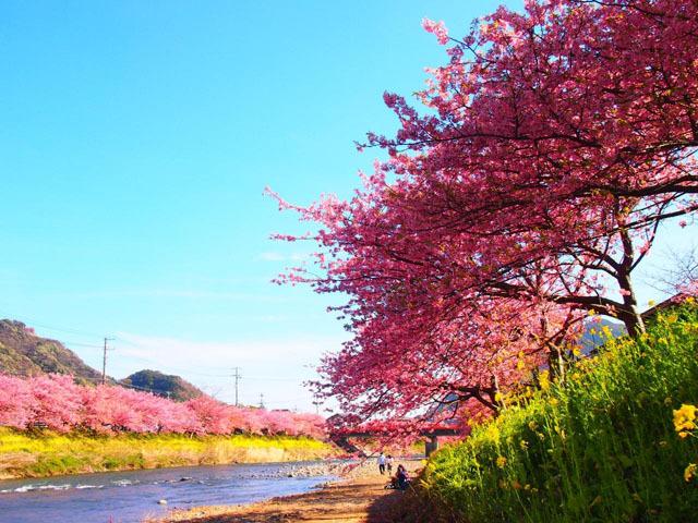 河津桜に千本桜! 絶景の桜が楽しめる2016年おすすめの花見スポット10選