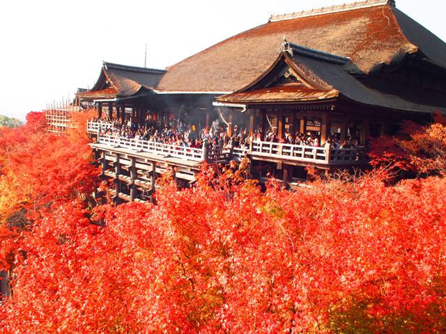 京都の紅葉を攻略! おすすめから穴場スポット、見頃やライトアップまで