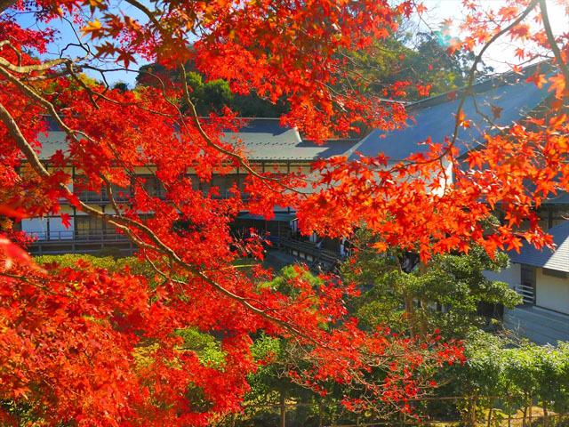 これから行ける! 関東と近郊の絶景紅葉スポット