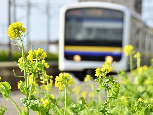 春はのんびり列車旅! 絶景車窓に癒されるローカル線 10選