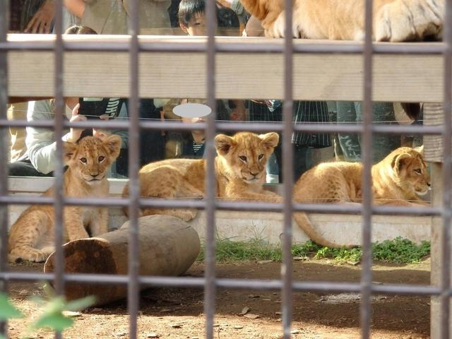 桐生が岡動物園