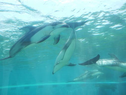 【石川県】のとじま水族館