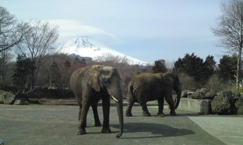 【静岡県】富士サファリパーク
