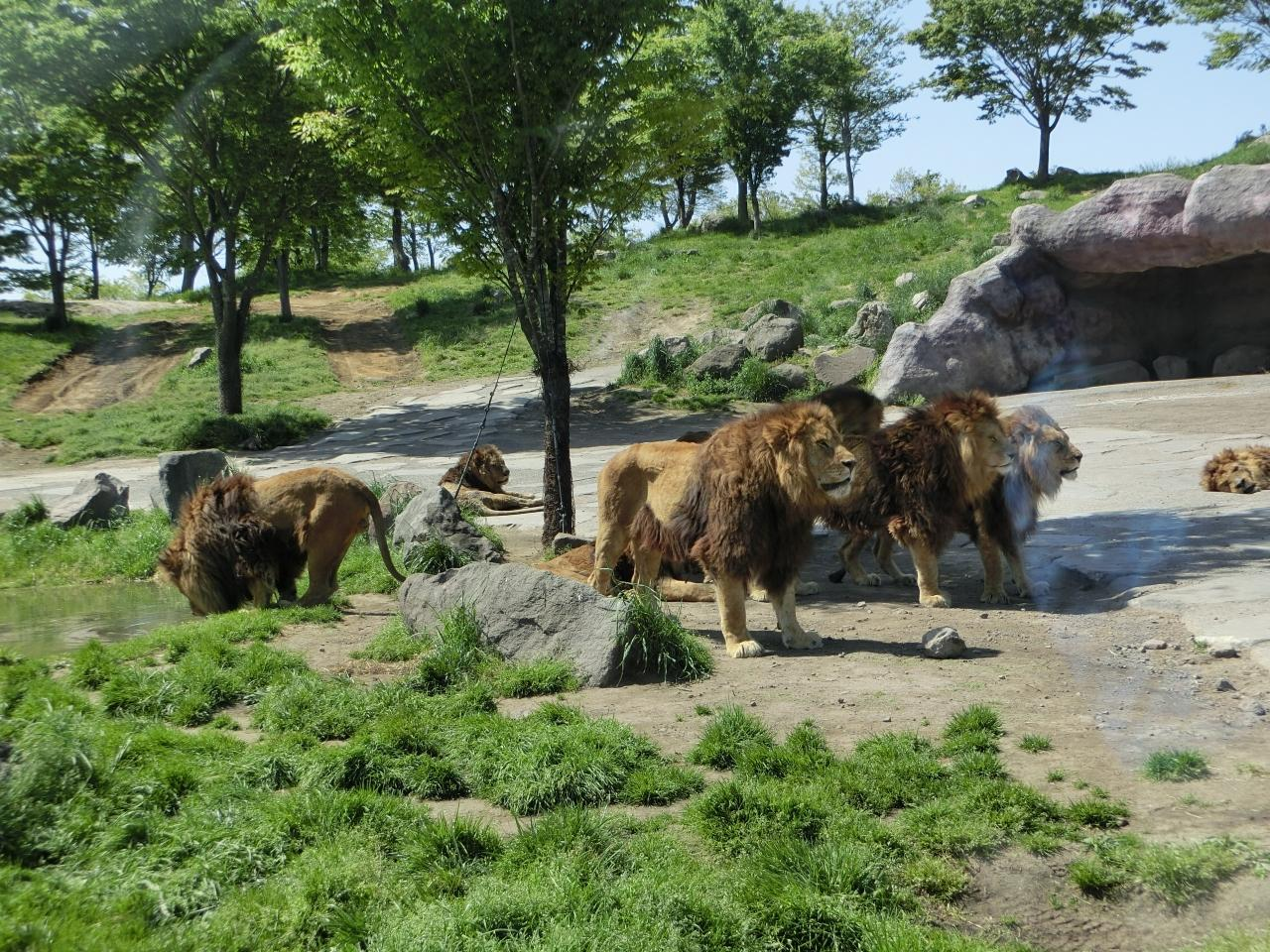 【大分県】九州自然動物公園アフリカンサファリ