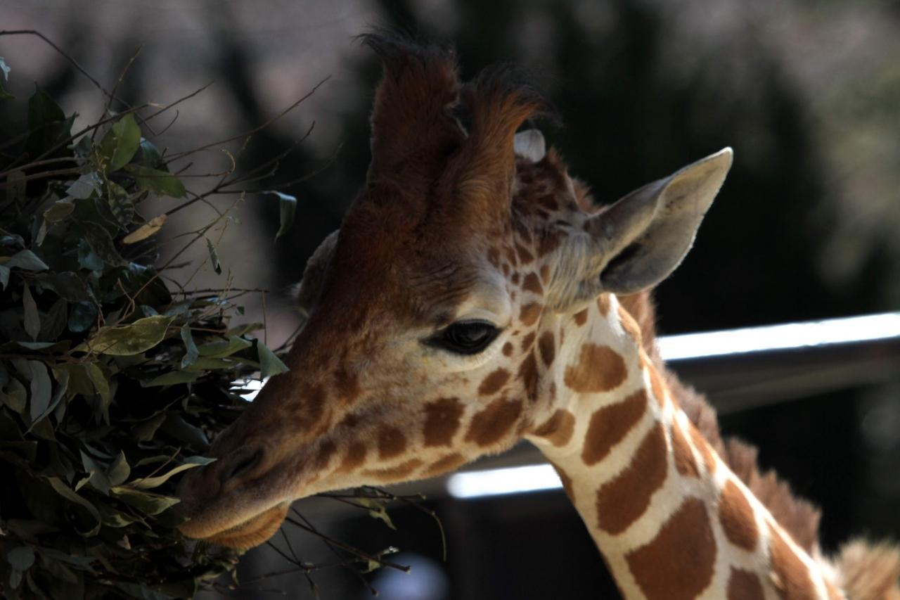 【広島県】広島市安佐動物公園