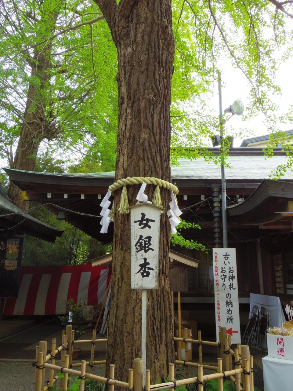 【14位】大宮八幡宮 / 高井戸・千歳烏山・八幡山